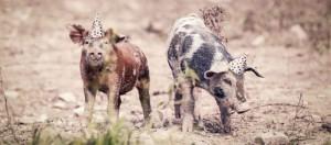 DNB saksøkes for grisete forvaltning